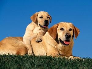 assicurazioni cani e gatti